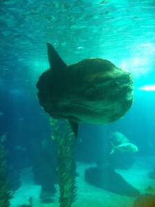 One Ugly Sunfish