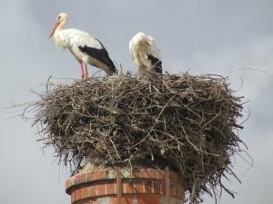 One of the many Stork nests around Lagos